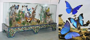378_Jim_Butterfly.Display